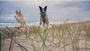 Ultimate Pet Care Sunshine Coast